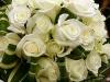 trandafiri-ivoirefrunza-dracaena